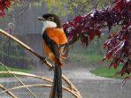 Ke Manakah Burung-Burung Saat Hujan, Bisakah Mereka Terbang?