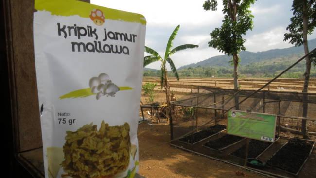 Kejam dan Abon Jamur yang Menggoyang Lidah dari Mallawa