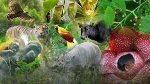 2020 Animasi Riko Rhino Tayang Dengan Tema Keberagaman Flora Dan Fauna Indonesia Klik Hijau