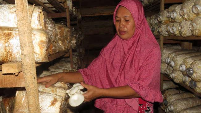 Desa Samaenre Mendulang Rupiah dan Merawat Bumi dengan Jamur