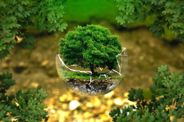 6 Kekayaan Sumber Daya Alam Teratas yang Dibutuhkan Demi Kelangsungan Makhluk Hidup
