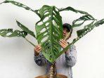 Daftar Lengkap Tanaman Hias yang Banyak Tumbuh di Indonesia dan Nama Latinnya