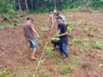 Musim Hujan, Legislator Ini Tanam 40.000 Pohon Porang di Kajang