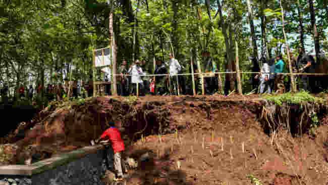 Pohon dan Vetiver, Harapan Baru Atasi Masalah Dam Gajah Mungkur