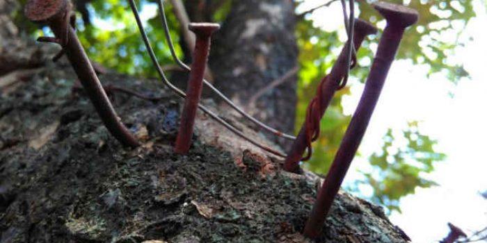 Teror Bagi Pepohonan Meningkat Jelang Pilkada