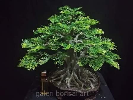 bonsai plastik