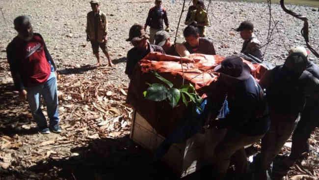 Dara Dilepas ke Taman Nasional Gunung Leuser di Usia 16 Tahun