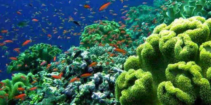 Pagari Laut Wakatobi, Bank Ikan ini Dapat Penghargan di New York Konservasi