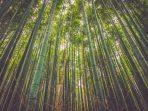 bambu di Toraja,