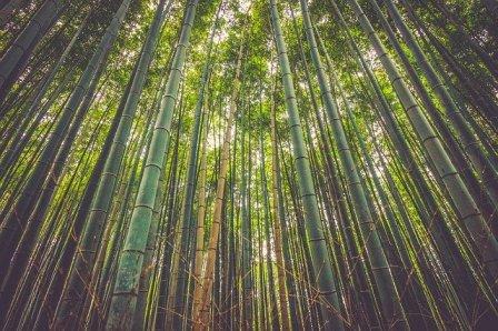 bambu di Toraja