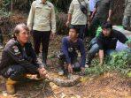 TN Gunung Halimun Salak Dapat Penghuni Baru Berupa 23 Ekor Ular