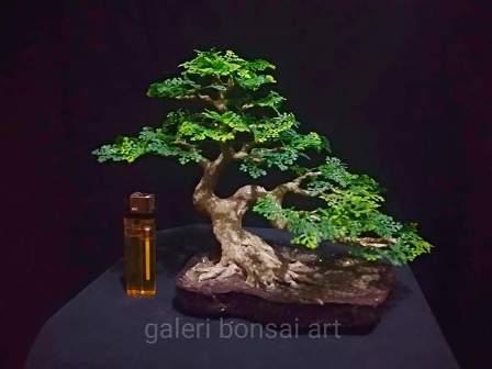 replika bonsai styrofoam