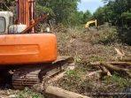 Pembalakan Liar Mangrove Lantebung, Kado Pahit Makassar di Hari Bumi