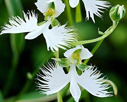 10 Bunga Unik Dan Misterius Yang Bikin Geleng Kepala Klik Hijau