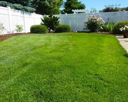 Jenis Jenis Rumput Yang Cocok Menjadi Karpet Hijau Di Halaman Rumah