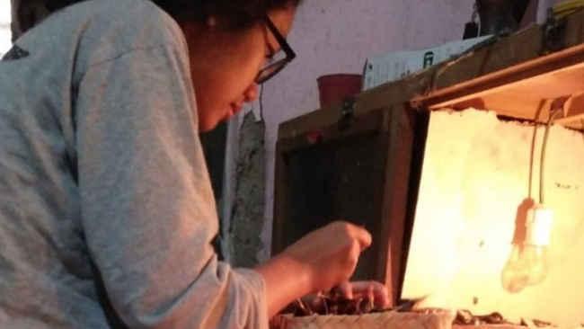 Kisah Kesuksesan Kaum Ibu Merawat Burung di Klaten