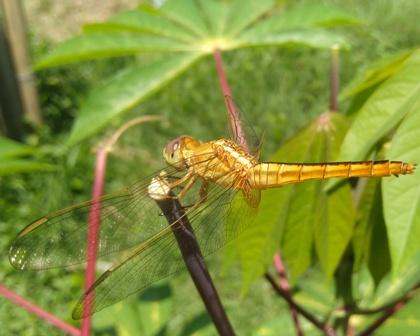 """Lebih Dekat dengan """"Indonesia Dragonfly Society"""", Komunitas Peduli Kelestarian Capung"""