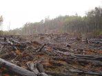 Di Balik Topeng Investasi, Indonesia Kehilangan 684 Ribu Hektare Hutan