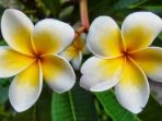 Macam-Macam Bunga yang Tahan di Segala Cuaca, Cocok di Halaman Rumah