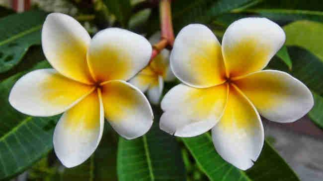 Macam Macam Bunga Yang Tahan Di Segala Cuaca Cocok Di Halaman Rumah Klik Hijau