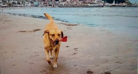 Belajar dari Molly, Anjing yang Rajin Memungut Sampah di Pantai
