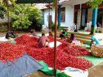 Berkah di Tengah Pandemi, Buah dan Sayuran Petani di Kaki Gunung Rinjani Mendunia