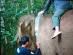 Cegah Konflik dengan Manusia, KLHK Pantau Gajah Sumatera dengan Teknologi GPS