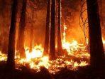 Deforestasi Akut, Hutan Indonesia Seperti Kehilangan Separuh Jiwa