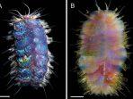 Ilmuwan Temukan Cacing Elvis, Spesies Baru Cacing di Dasar Laut