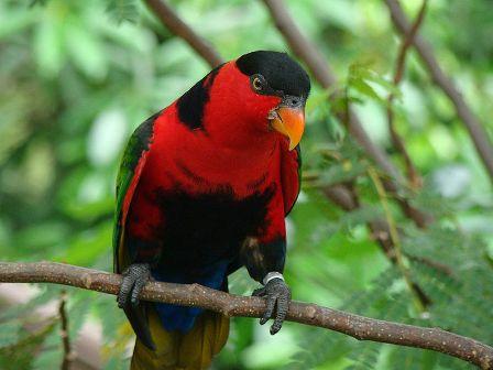 Kenali 11 Jenis Burung Dilindungi yang Banyak Beredar di Pasar Ilegal Sulawesi Selatan