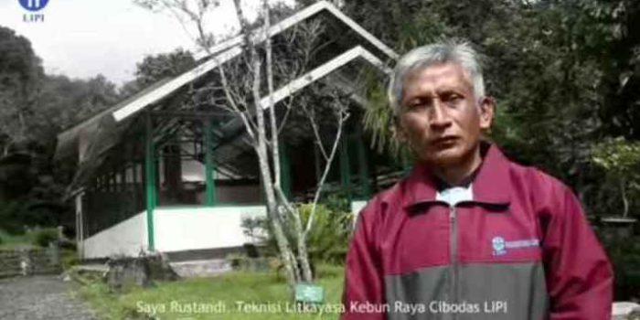 Menengok 37 Tahun Kesetian Rustandi Menjaga Flora Indonesia