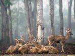 Perihal Larangan Perburuan Satwa di Hutan, 4 Hal Ini Penting Diketahui!