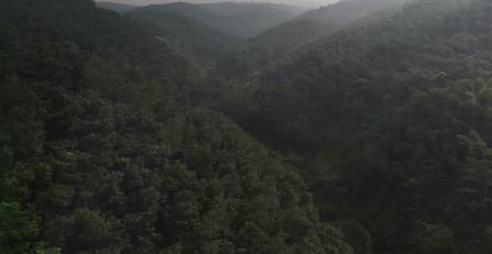 Laju Deforestasi Indonesia Turun, Keanekaragaman Hayati Terlindungi