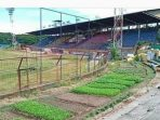 Sedang Nganggur, Kandang PSM Makassar Jadi Kebun Sayur
