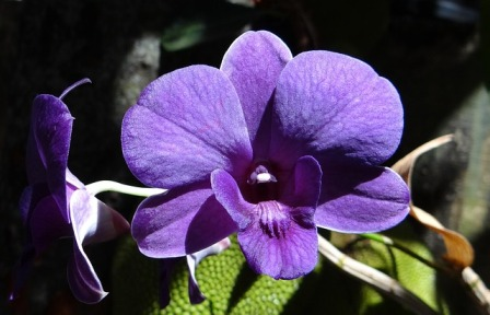 5 Macam Bunga dengan Warna Menawan yang Layak Ditanam di Halaman Rumah