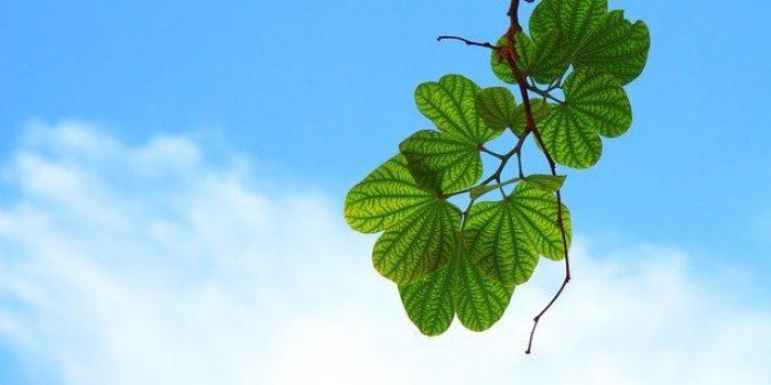 7 Filosofi Daun Hijau yang Membuat Hidup Anda Semakin Bermakna