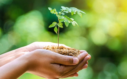 Daftar Hari-Hari Lingkungan Hidup dan Kehutanan Terlengkap