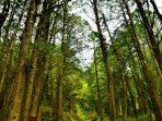 Kenali 12 Jenis Kayu Langka di Indonesia yang Kelak Bakal Dirindukan