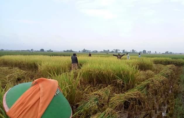 Kerap Tersangkut Konflik Lahan, Perlindungan HAM bagi Petani Masih Terabaikan