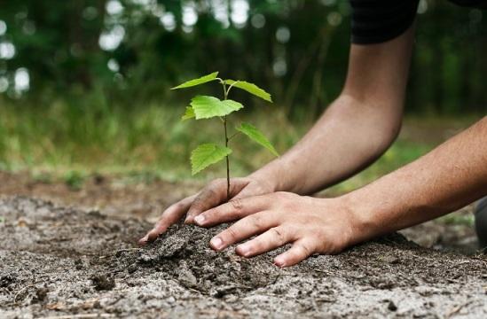 Cara Membuat Taman Rumah Berkelanjutan dengan 3 Pertanyaan
