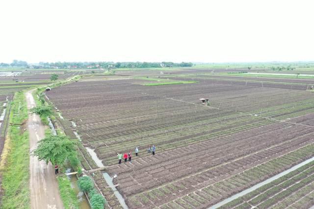 Petani Bawang Merah di Pati Mulai Menerapkan Budidaya Ramah Lingkungan