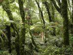 Hari Hutan Sedunia, Saat Tepat Merawat Kesadaran akan Pentingnya Peran Hutan