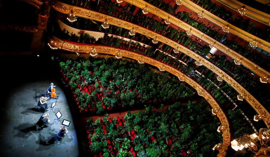Unik, Tanaman Gantikan Manusia Menonton Konser di Barcelona