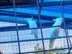 Burung Seorang Perempuan 70 Tahun Diamankan Tim Operasi TSL