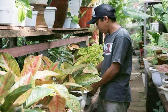 Cerita Pedagang Tanaman Hias di Makassar Berjualan Selama Pandemi