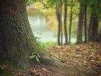 Daftar Lengkap Nama Pohon di Indonesia, Plus Nama Latinnya