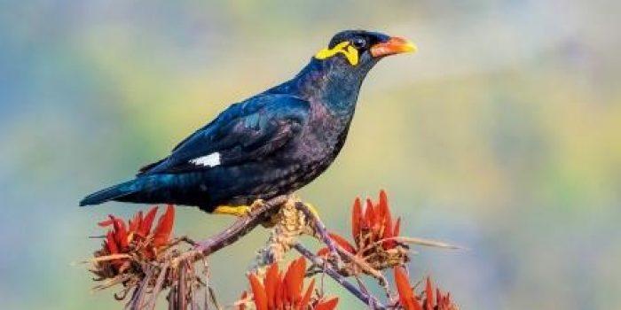 Perihal 2 Ekor Burung Penyebab Warga Padang Pariaman Terjerat Hukum
