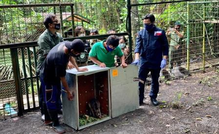Kabar Baik, 91 Satwa Asli Indonesia Pulang ke Tanah Air