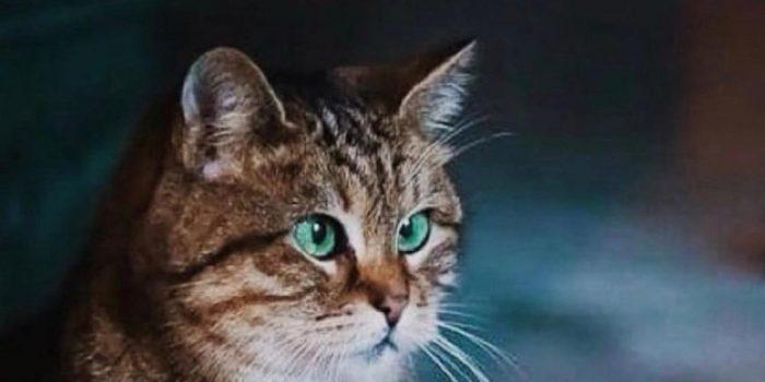 Kisah Seekor Kucing yang Menjaga Museum dan Masjid