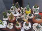 Laris Manis, 7 Jenis Bunga Ini Paling Diburu di Makassar!